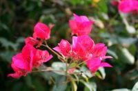 گلهای زیبای کاغذی بندرعباس